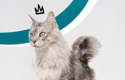 Стартира CatfluencerBG – първата академия за котки инфлуенсъри