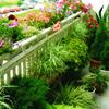 Моята цветна градина