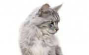 Защото си котка, но си и звезда
