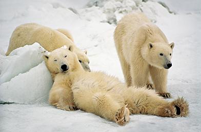 Питай ме, питай ме: Има ли ефективен начин да предотвратим качването на килограми през зимата?