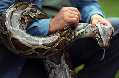 Gucci си отвори ферма за змии