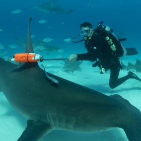 """""""Седмицата на акулите"""" се завръща по Discovery Channel"""