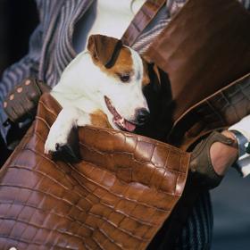 MUST HAVE: Крокодилска чанта за есента