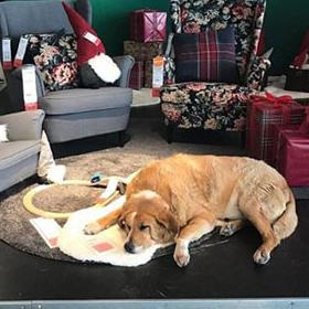 Дизайн за любов: IKEA приюти бездомни кучета