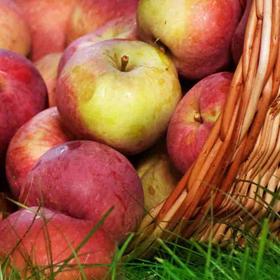 Жълта, червена или зелена ябълка?