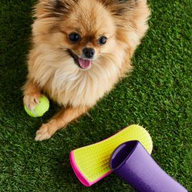We love: Tangle Teezer, ама за кучета!
