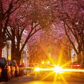 Sakura Pink - цветът на надеждата - единственият, от който се нуждаем