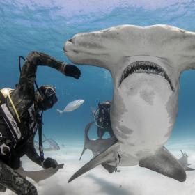 """National Geographic Wild  анонсира най-големия """"Фестивал на акулите"""" досега със старт през Юли 2021г."""