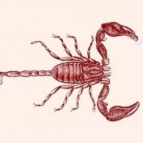 Queen of the Desert: най-готините и най-проблемни партньорства на зодия Скорпион, знак по знак