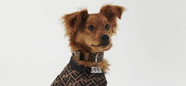 По-скъпи от собственика: FENDI извадиха фирмени каишки за кучета