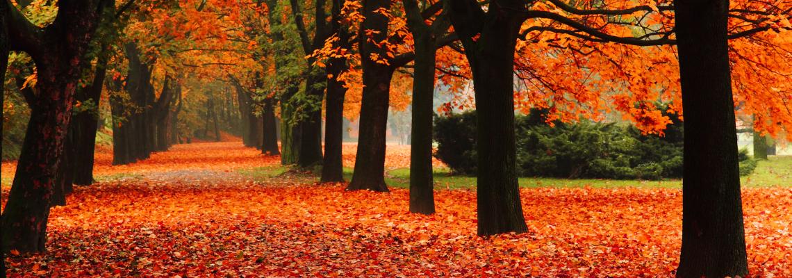 It shopping list: Есен е, бре!
