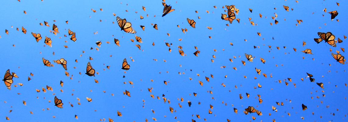 Криле на желанието: Пеперуди, изненади, любов
