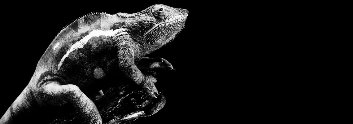 Dare U: Воден хамелеон