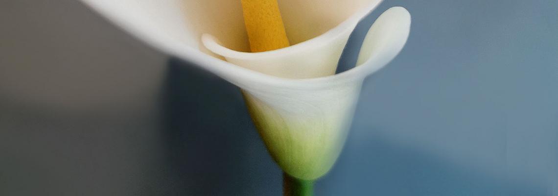Цветята на малката Ида: Кала
