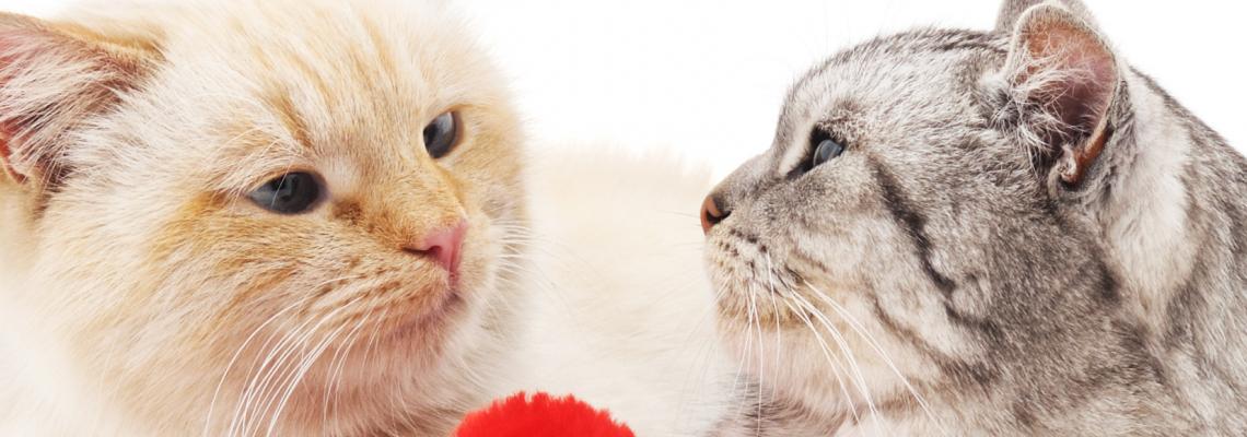 100 котки с призив за помощ