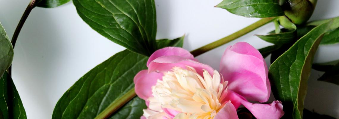 6 причини в полза на МИГНОВЕНОТО сдобиване със серум