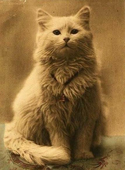 Една от първите снимки на котка от 1880 г.