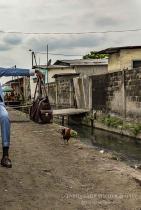 Тарик Заиди От 2015 г. досега неговите истории, снимки и видеа от Ангола, Бразилия, Камбоджа, Чад, Конго и други са включени в над 900 списания, вестници, сайтове (в повече от 60 страни), между които The Guardian, BBC, CNN, National Geographic, Washington Post, Vogue, Esquire, и много други.